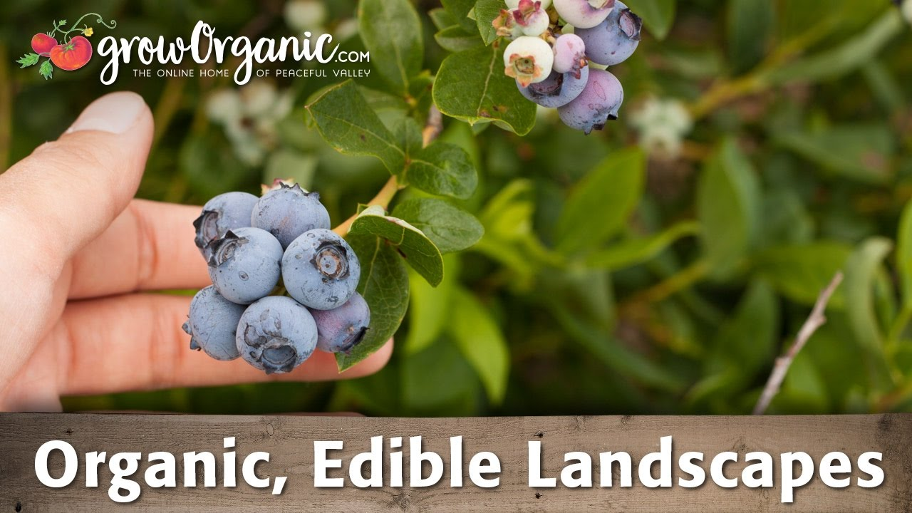 How To Grow Organic Edible Landscapes Groworganic Peaceful Valley
