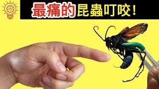 10個世界上【咬人最痛】的昆蟲!離它們遠點! thumbnail