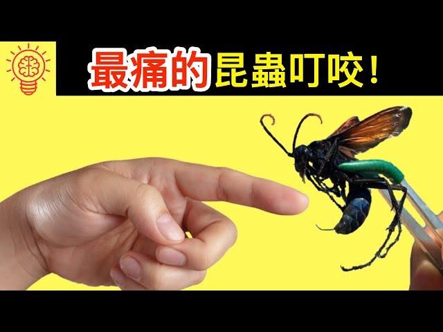 10個世界上【咬人最痛】的昆蟲!離它們遠點!