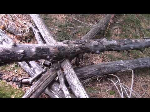 Giant Teepee Blind , Biggest Blind/Fort, Eagle Co Bigfoot