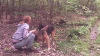 2 psy  znalezione w lesie - Sara i Nero.
