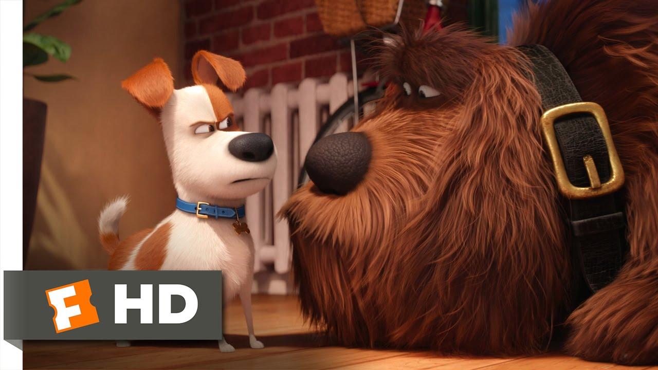 The Secret Life Of Pets Max Meets Duke Scene 2 10 Movieclips