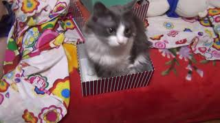 Кошка подарок Почему кошки любят коробки Кошка Серафима