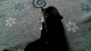 Кошка бросила котят!