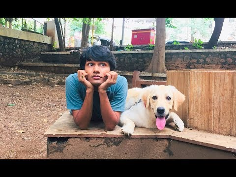 DOG SHORT FILM | MY FRIEND POCKET | LABRADOR RETRIEVER  || MOHAK MEET || SEEMA