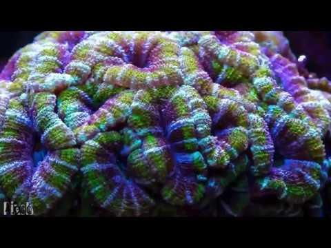 Infected Mushroom & Hope - Where do I Belong - --// Full HD Visual Trippy Video Set\\-- - [GetAFix]