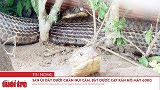 San ủi đất dưới chân Núi Cấm, bắt được cặp rắn hổ mây gần 60kg