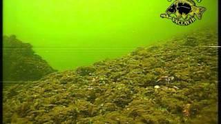 Nahlédnutí pod vodní hladinu 2