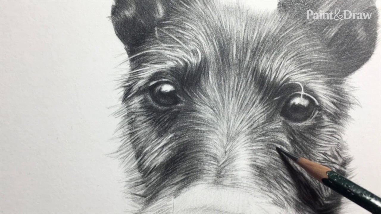 Draw a pencil pet portrait