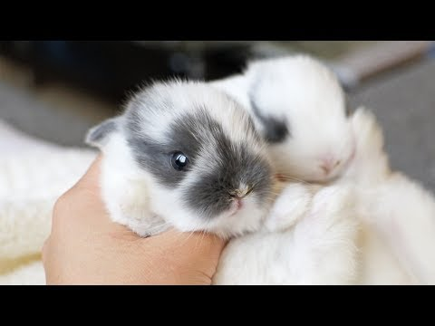 The cutest little bunnies in the world!