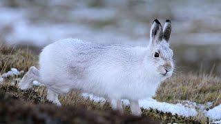 #4085. Кролики и зайцы (В мире животных)
