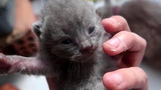 Mèo Con Nhà Mình Mở Mắt Rồi || VŨ LIZ VLOG 26!