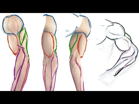 How To Draw The Muscles Of The Arm Simple Anatomy Tutorial Youtube