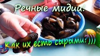 Речные мидии перловицы Какие вкуснее сырые или жаренные (эксперимент) | Лысый Повар