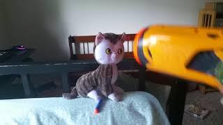 Cats  v.k