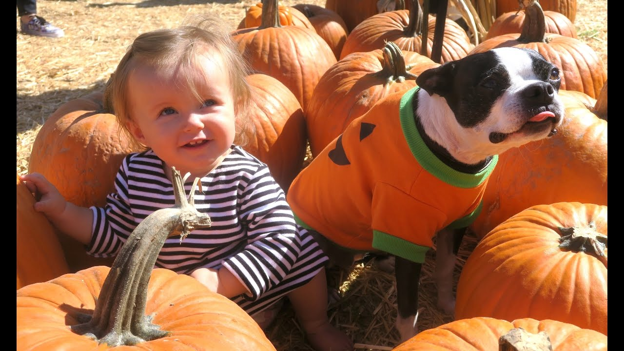 baby's first halloween, cuteness overload!!!! (431) - youtube