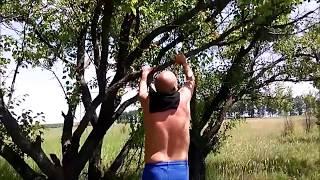 Новая Водолага, Харьковская обл  Зарисовки   БАМ, Овраг , Флора