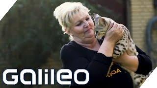Die verrücktesten Haustierbesitzer Deutschlands | Galileo Lunch Break