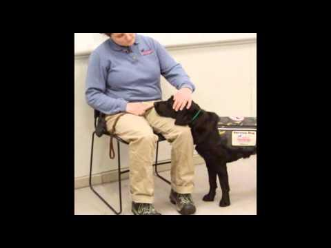 Ptsd Service Dog Tasks Youtube