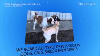 Dog Kennel In Kasilof, Ak | Coopers Wounded Bear Farm & Kennels