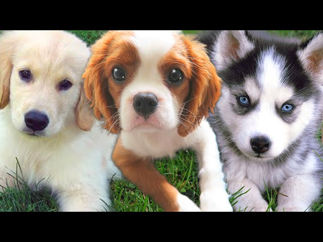 puppy dating games Free stray puppy care games for everybody - take care of this lost puppy and give him the love he needs in this wonderful pet care browser game, stray puppy care.