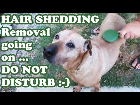dog-shedding-brush-comb---brushing-pet-dogs-shed-hair-remover---grooming-groomer-supplies---jazevox