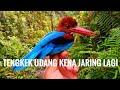 Menjaring Burung Tengkek Udang  Mp3 - Mp4 Download