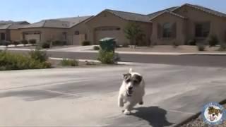 Собака хозяйка