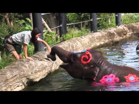 Taronga Zoo's Elephants Celebrate Thai New Year in Traditional Style