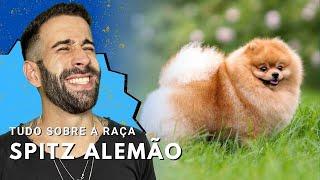 CURSO DE ADESTRAMENTO ONLINE !!! https://goo.gl/WnEmr4 Fique ligado...