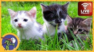 Котятки первый раз гуляют в саду