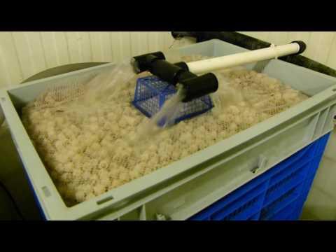 Filtration system in Aquatica - Ornamental fish farm #2