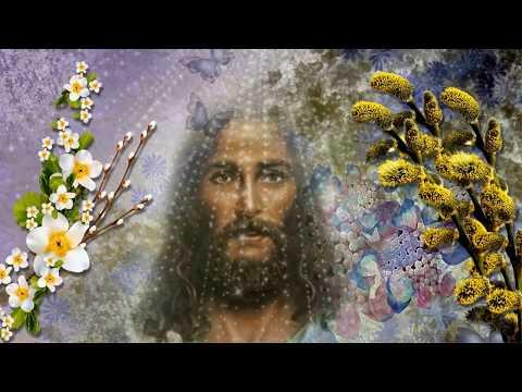 🌹С Вербным Воскресеньем! 🌹Самое лучшее - Познавательные и прикольные видеоролики