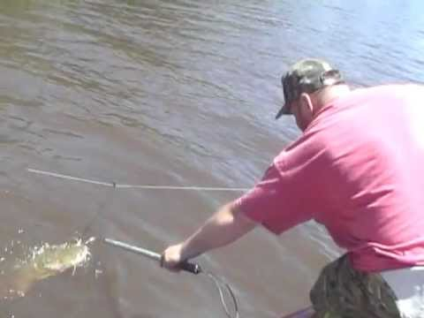 RanGary Flathead Op catfish Ouachita River trotline