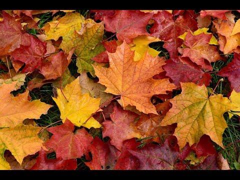 Прогноз погоды на ноябрь от Гидрометцентра
