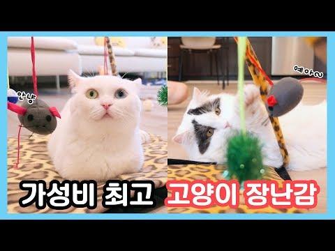 가성비 최고의 고양이 장난감!