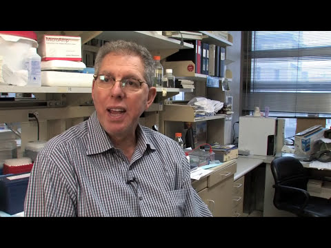 Jeffrey Friedman discusses research on leptin and obesity