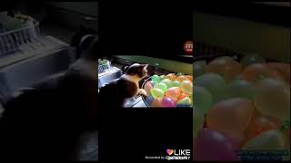 коты VS шарики