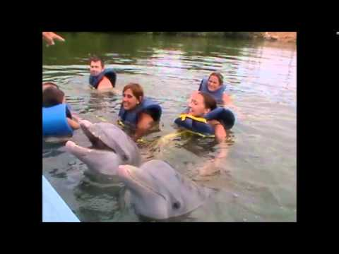 Swimming with Dolphins, Varadero, Cuba