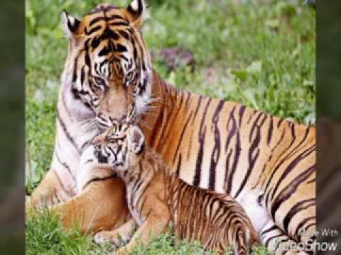animales terrestres - photo #35