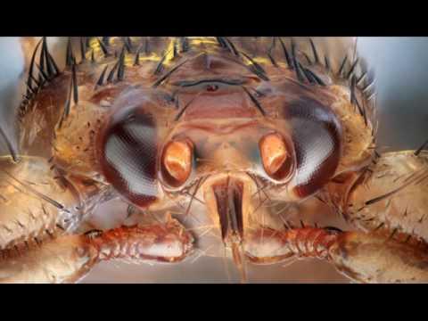 Как использовать дуст от тараканов
