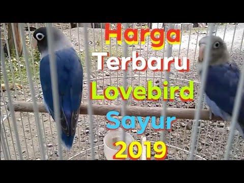 Harga Lovebird Sayur Terbaru 2019