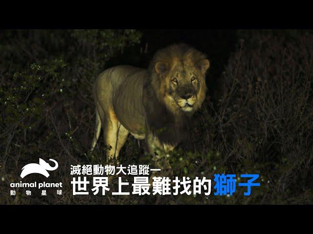 史上最難找的獅子—已滅絕南非獅的基因密碼 動物星球頻道
