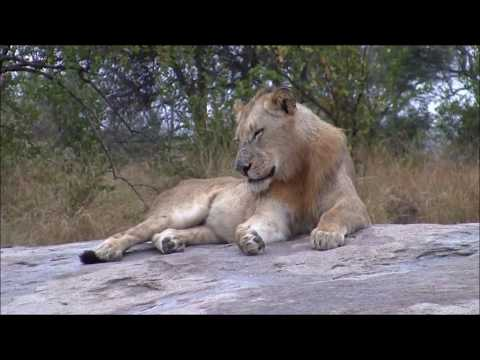 Young king Scar Nose Majingilane on his throne at the Kruger Tablets