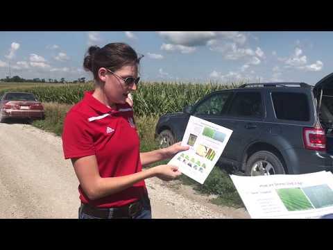 Дроны в сельском хозяйстве США