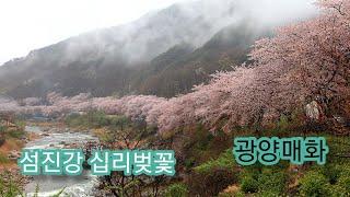 광양매화마을 청매실농원 섬진강 매화마을 하동십리벚꽃 광…