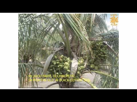 Deejay Coconut movie 1