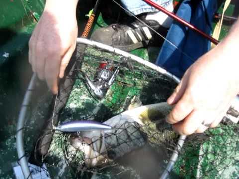 Kensico Bridge Fishing RT 22 NY