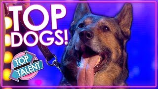 AMAZING Dog Performances Around The World on Got Talent | Top Talent