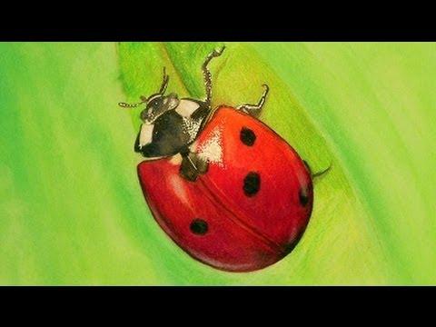 Speeddrawing Marienkäfer Ladybug